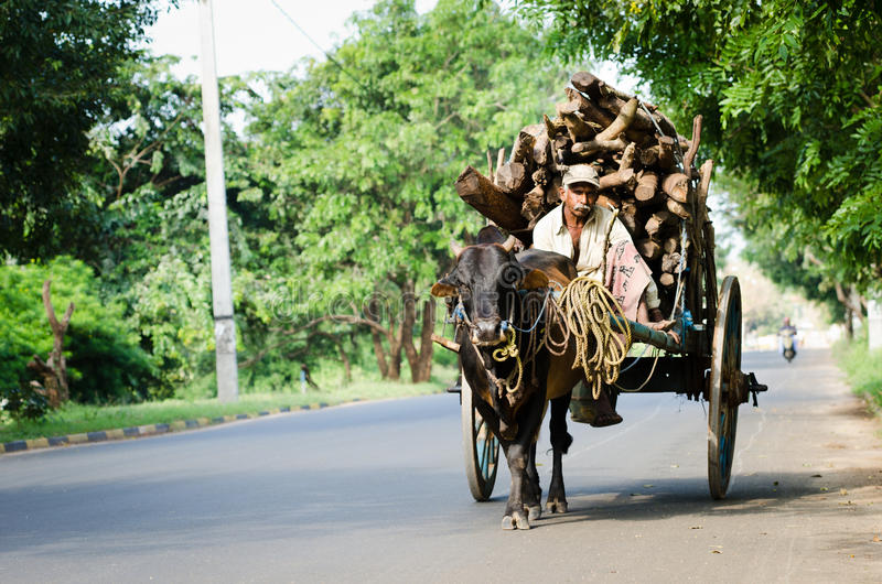 Traditional nature cargo transport, Sri Lanka royalty free stock photo