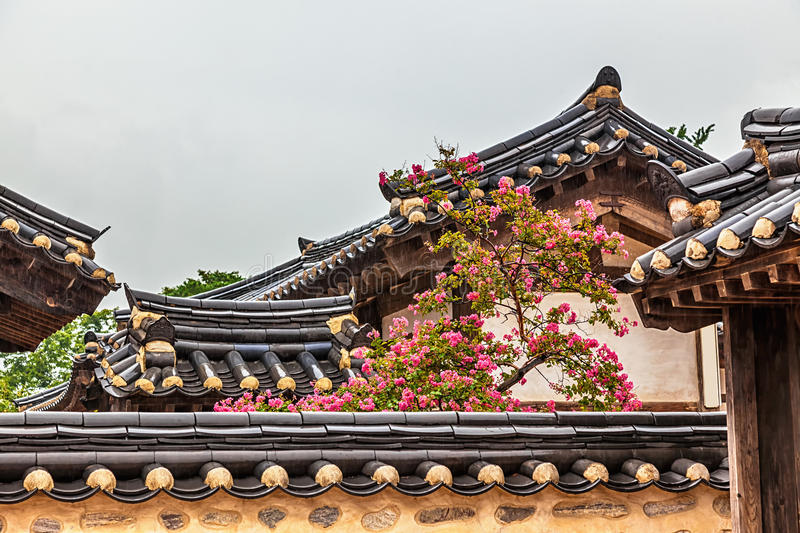 Traditional old korean building with tree and flowers. Traditional old korean architecture building with tree and pink flowers at rainy day in South Korea royalty free stock photography