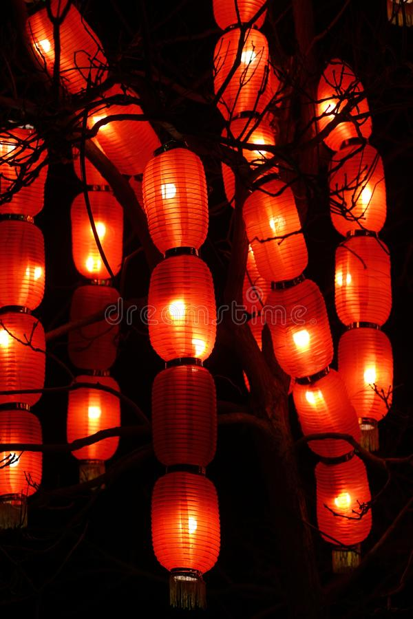 Traditional oriental chinese lanterns hanging on a tree. Abstract  background royalty free stock photo