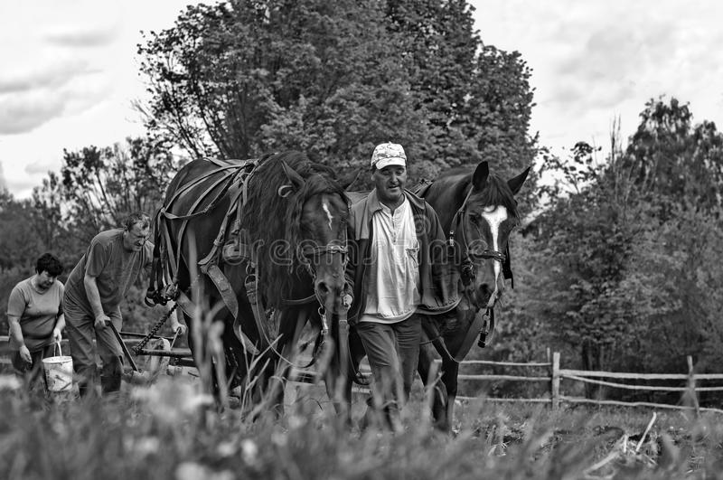 Traditional ploughing without pollution. Traditionally horse pulled ploughing, without machines pollution in Harghita county, Romania. Artisitc black and white stock photo