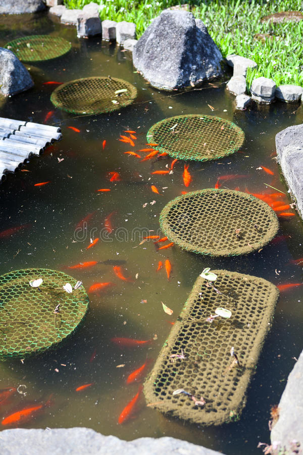 Traditional pond with lot of color fishes in Haswdera shrine in Kamakura, Japan. Traditional pond with a lot of color fishes in Haswdera shrine in Kamakura stock images