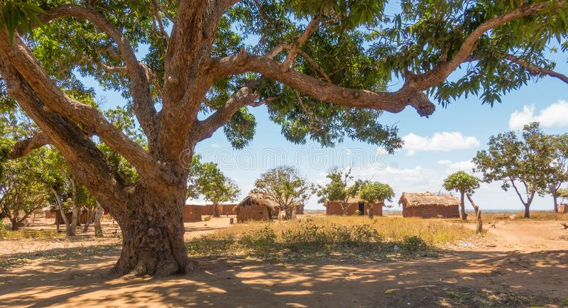 Traditional Giriama community with mango tree. A traditional rural Kenyan Giriama tribe group of houses build in ancestral palm thatched roofs and mud walls royalty free stock photos