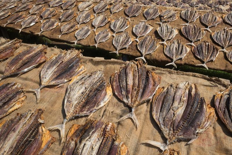Traditional salted fish drying on racks in Midigama Srilanka stock photos