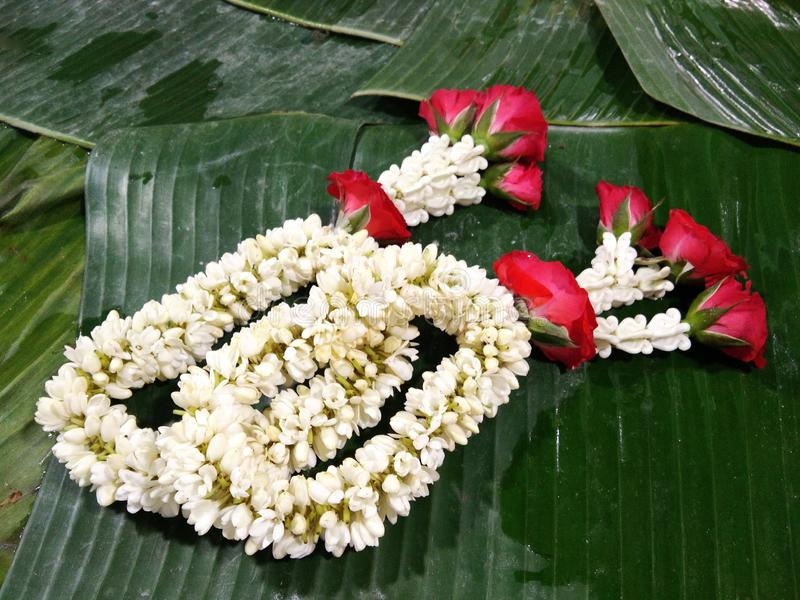 Traditional Thai garland of white blossom Psilanthus bengalensis and red rose flowers. White blossom Psilanthus bengalensis, Rubiaceae family flower with red royalty free stock image