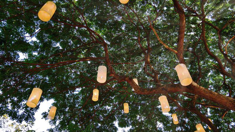Traditional Thai Lanterns Hanging on Tree Branches. Traditional Thai Lanterns Hanging on Large Tree Branches stock photography