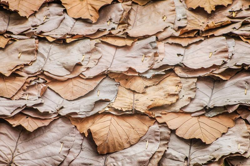 Traditional thai patterns of layer dried leaves roof texture ,nature background stock photos