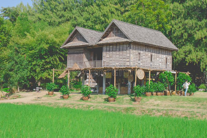 Traditional Thai wooden house with green rice field at countryside. royalty free stock photo