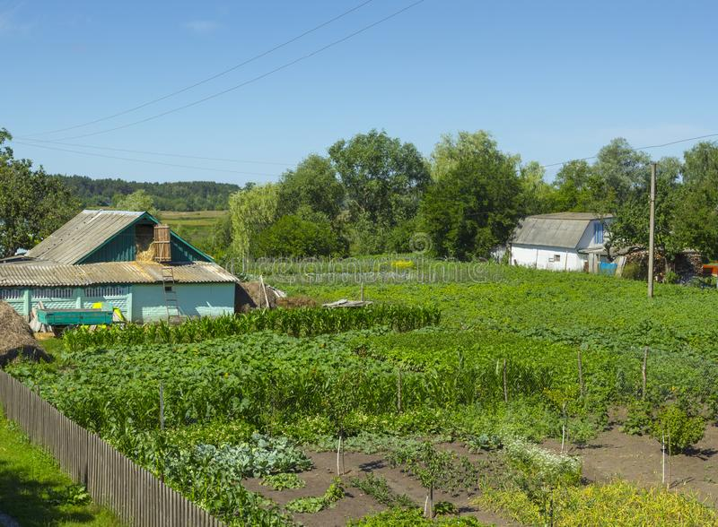 Traditional ukrainian dacha. With fences and a building surrounded by different trees and plants. People like active relaxation via gardening royalty free stock image
