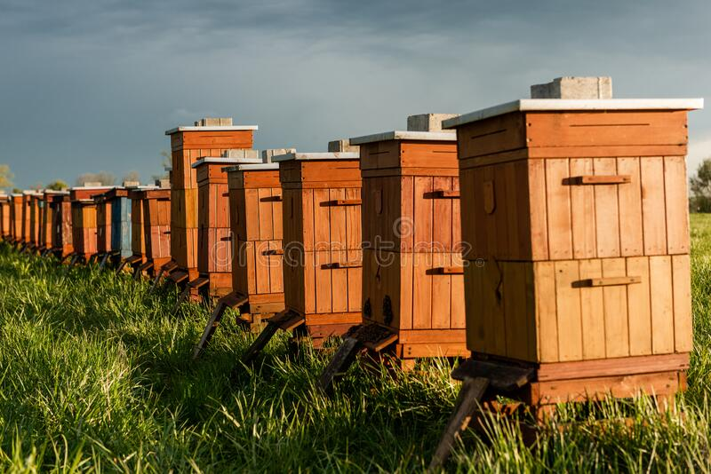 Traditional Wooden Beehives in Fields. Beekeeping and Honey Production. Organic Food Farming stock images
