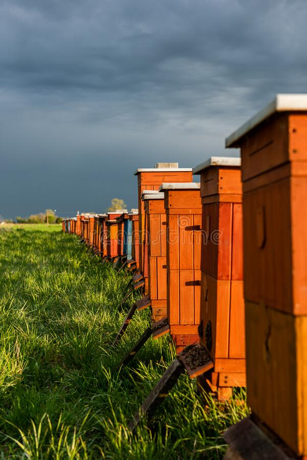 Traditional Wooden Beehives in Fields. Beekeeping and Honey Production. Organic Food Farming royalty free stock photos