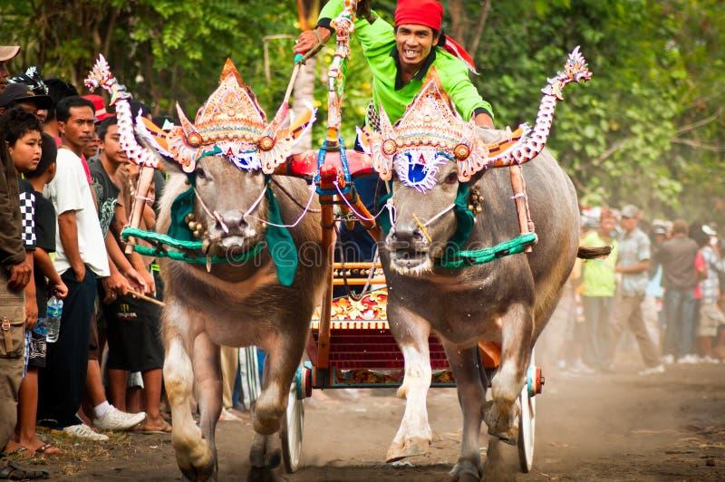 Traditioneel de Koeras van Bali stock fotografie