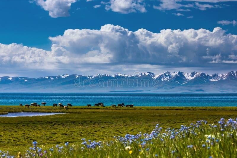 Traditioneel weiland in het hooggebergte kyrgyzstan Het Meer van liedkol stock afbeeldingen