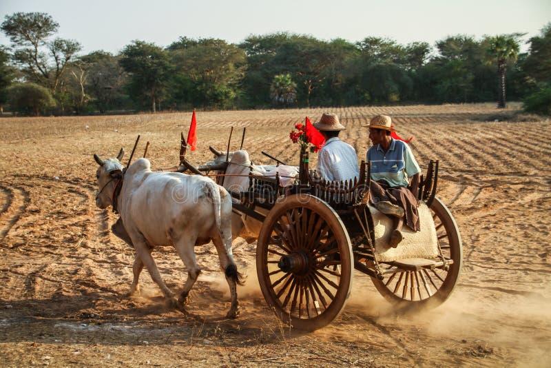 Traditionele die ossewagen door 2 landbouwers, Bagan, het gebied van Mandalay, Myanmar in werking wordt gesteld stock afbeelding
