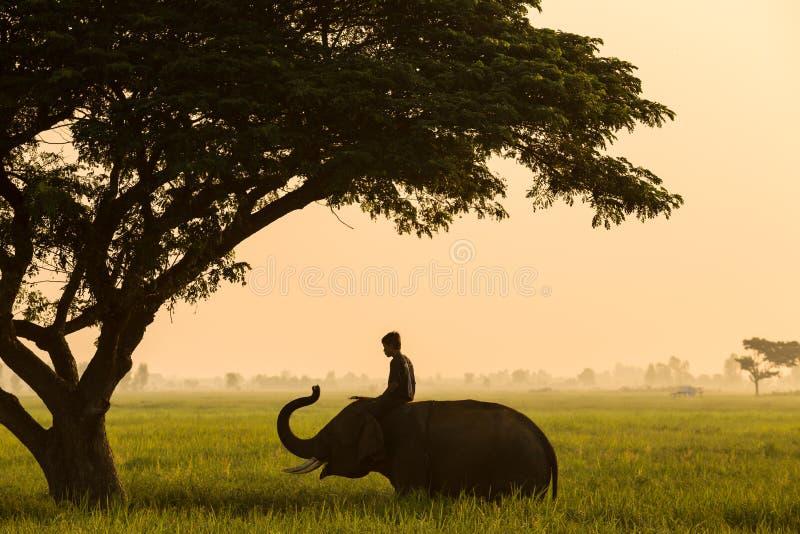 Traditionele het leven van olifants mahout Thailand royalty-vrije stock afbeelding