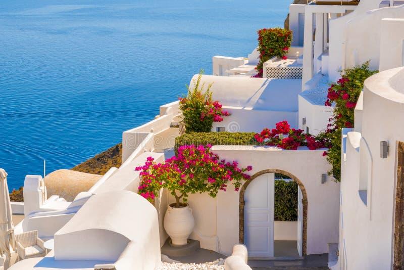 Traditionele huis en bloem in Oia Santorini royalty-vrije stock fotografie