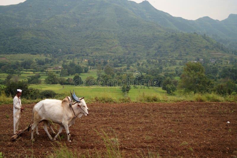 Traditionele Indische landbouwer stock afbeeldingen