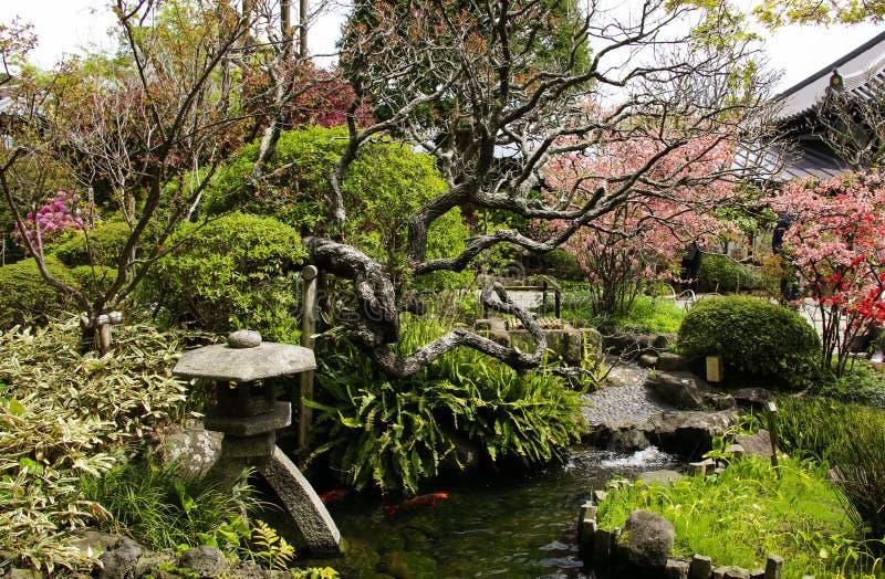 Traditionele Japanse decoratieve tuin met vijver, steenlantaarn en bloeiende kweepeerbomen, Hasedera-tempel, Kamakura, Japan stock foto