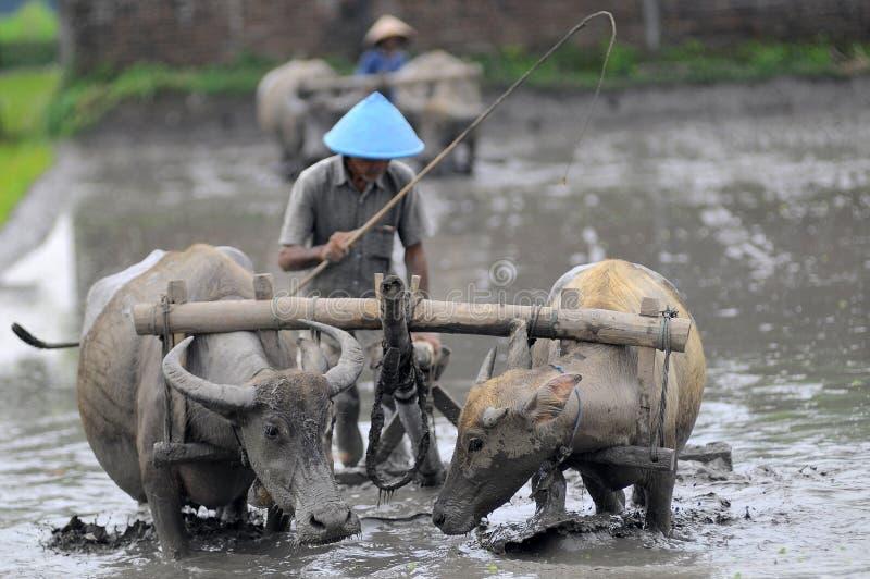 Traditionele landbouwer stock foto's