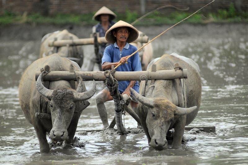 Traditionele landbouwer stock afbeeldingen
