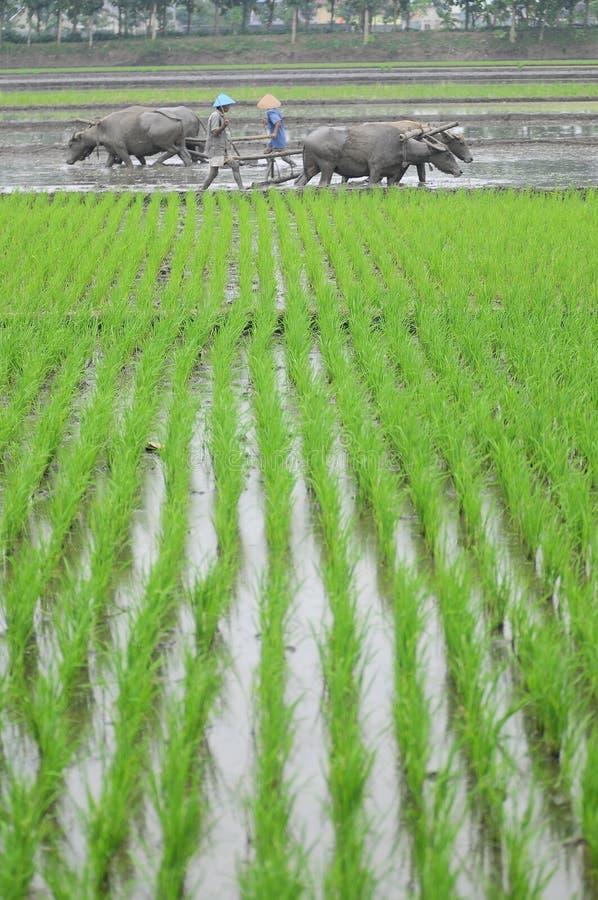 Traditionele landbouwer stock fotografie