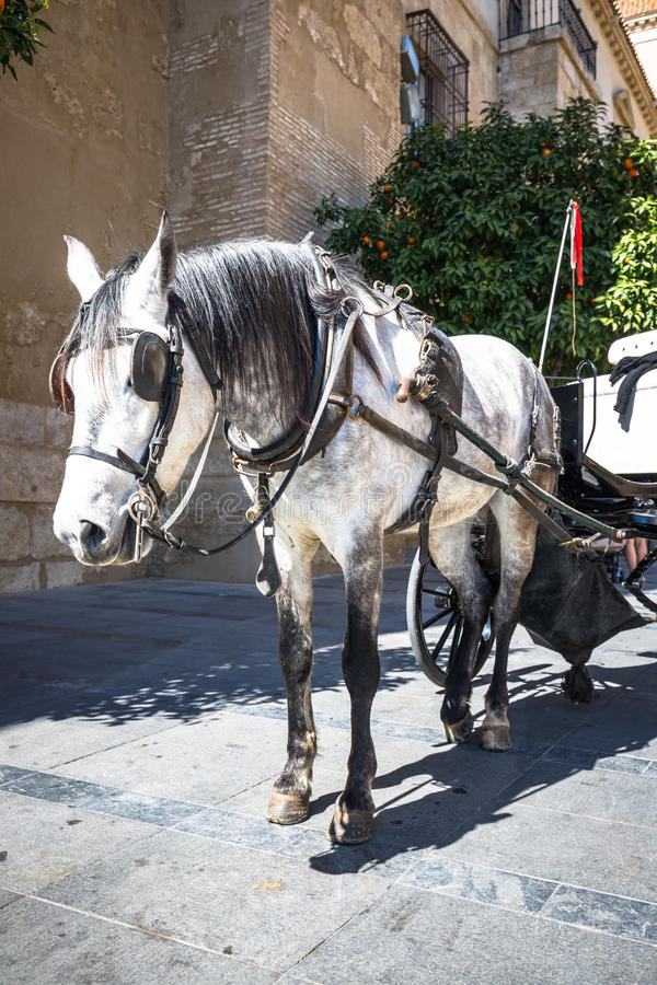 Traditionele Paard en Kar in Cordoba Spanje - reisachtergrond royalty-vrije stock foto's