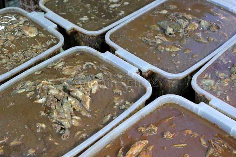 Traditionele Thaise ingelegde vissen bij voedselmarkt stock afbeeldingen