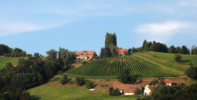 Traditionele wijngaard in lager Stiermarken stock foto