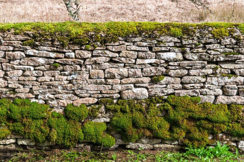 Traditionell cotswoldstenvägg med mossa royaltyfri foto
