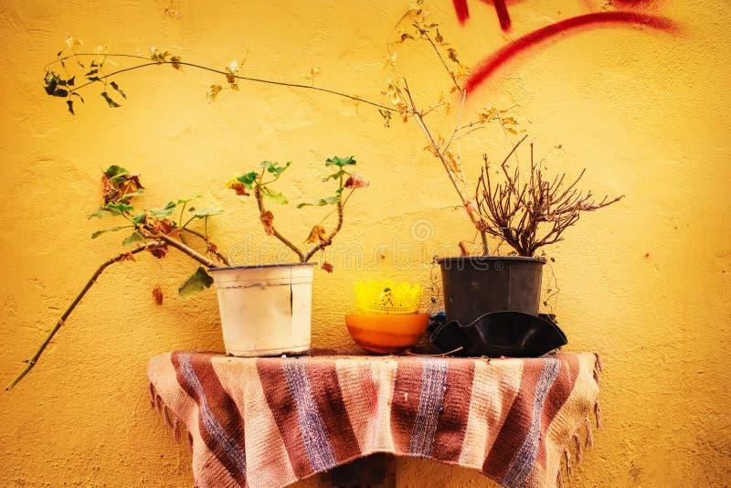 Traditionell detalj av Chania den gamla staden - gul vägg och blomkrukor arkivbild