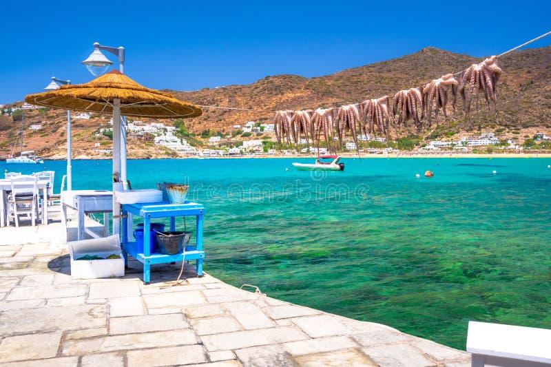 Traditionell grekisk havsmat, bläckfisk som torkar i solen, Milopotas, Ios-ö, Cyclades arkivfoton