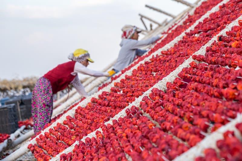 Traditionell pepparuttorkningprocess i Gaziantep, Turkiet arkivfoto