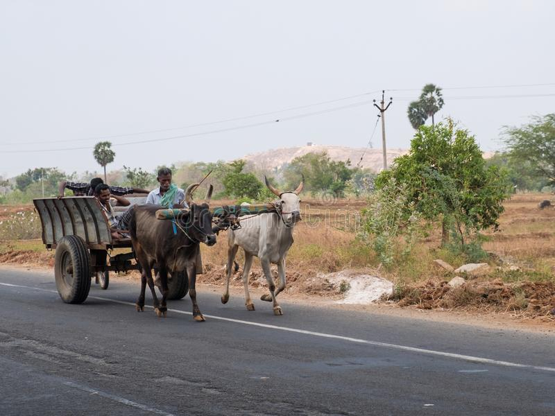 Traditionell transport i Tamil Nadutillstånd arkivbild