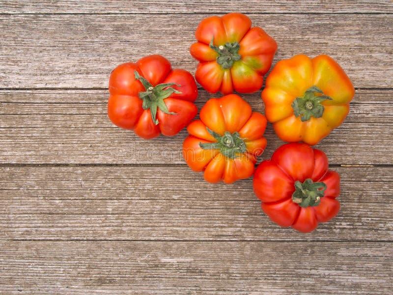 Traditionell variation av italienska tomater fotografering för bildbyråer