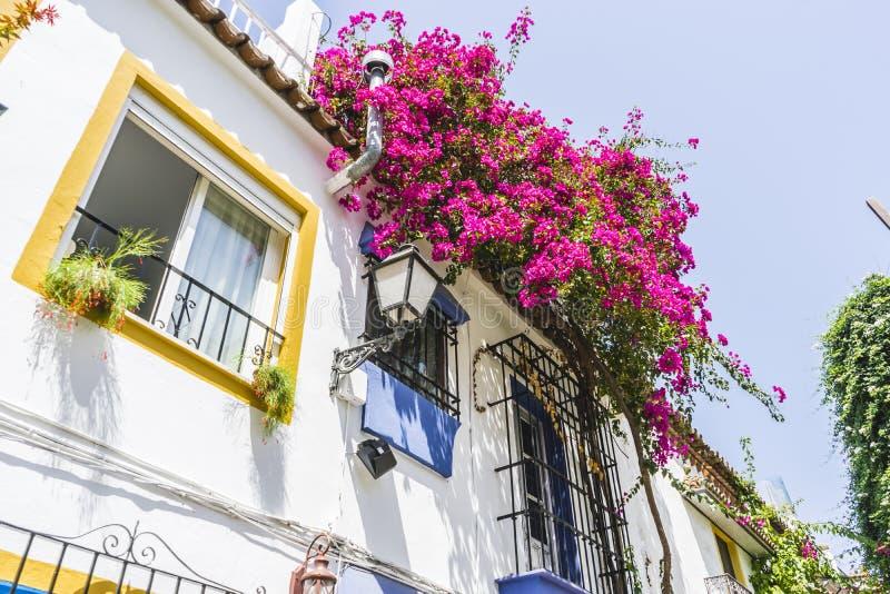 traditionella Andalusian gator med blommor och vithus in royaltyfri foto