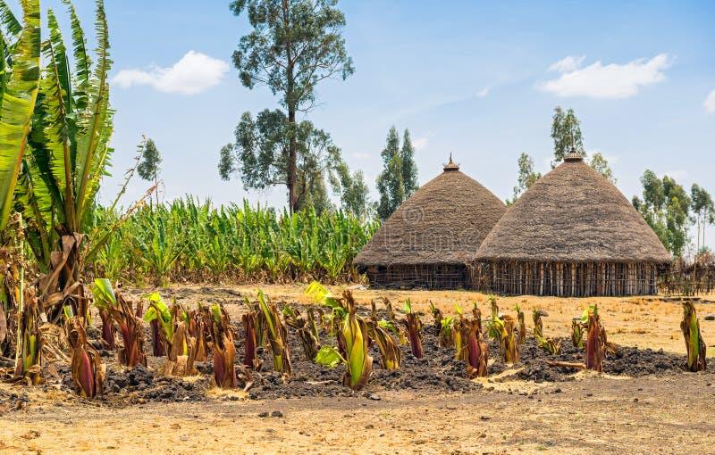 Traditionella byhus i Etiopien arkivbild