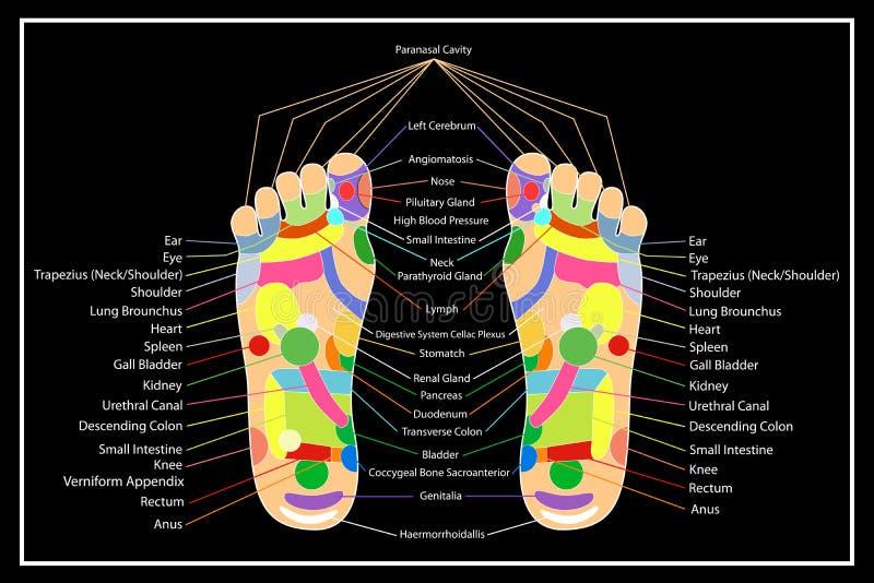 Traditionelle Alternative heilen, Akupunktur - Fuß-Entwurf lizenzfreie abbildung