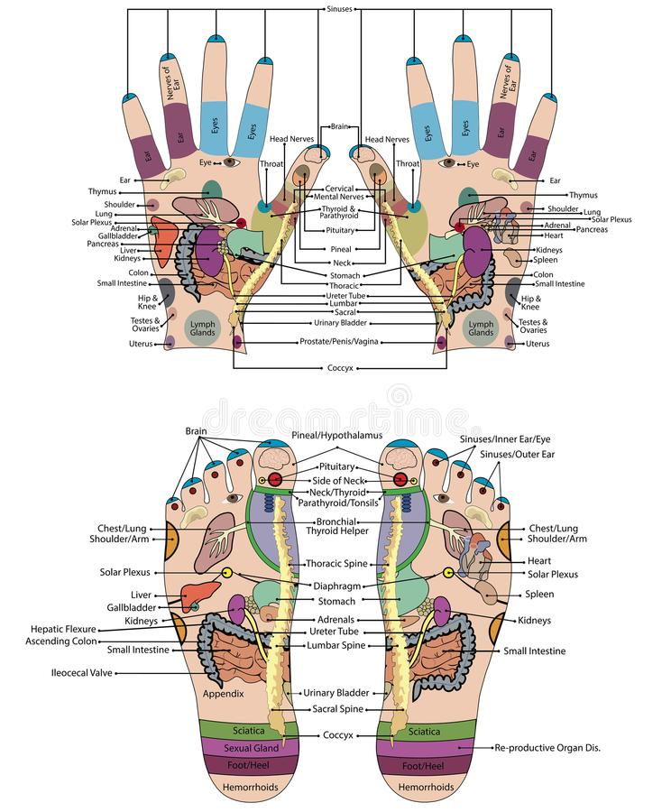 Traditionelle Alternative heilen, Akupunktur - Fuß und Handentwurf lizenzfreie abbildung