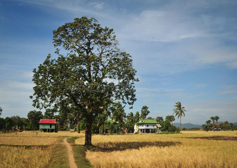 Traditionelle Häuser mit Reisfeldern an Hong Ngu-Stadt in Dongthap, Vietnam lizenzfreie stockbilder