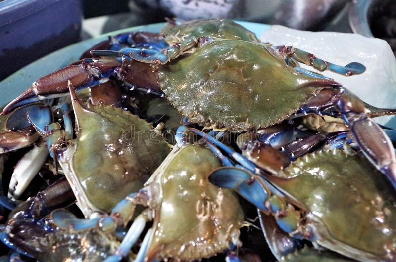 Traditionelle Meeresfrüchte-Marktanzeige in Tegucigalpa-Platte voll der blauen Krabbe stockbilder