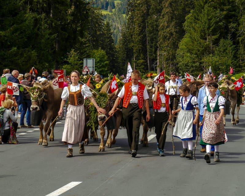 Traditionelle Schweizer Kuhparade (Alpabzug) in Swuitzerland stockbild