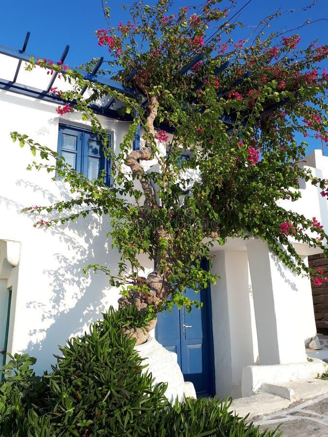 Traditionelles griechisches Haus mit Bongovilia stockbild