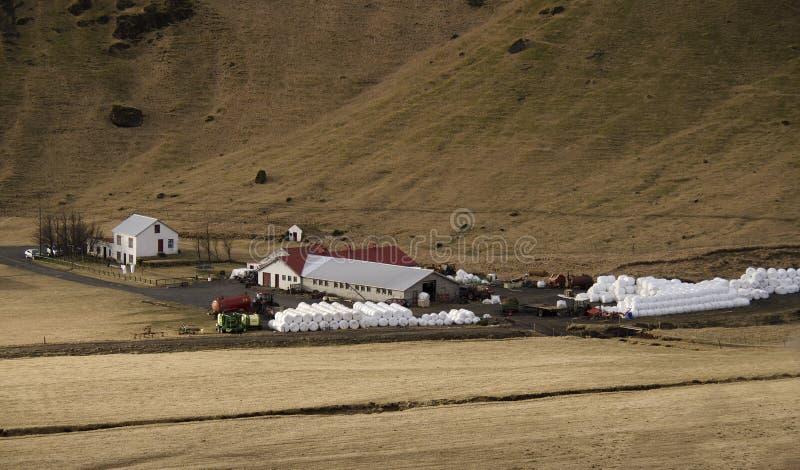 Traditionellt bruka i Island Vita runda baler med gr?s som ligger n?ra en lantg?rd p? ett torrt gult gr?s i Island arkivbilder