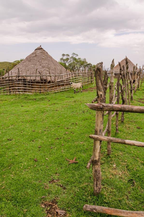Traditionellt halmtäcka, lera och wood hus av fårbonden i högländer av Kamerun, Afrika fotografering för bildbyråer