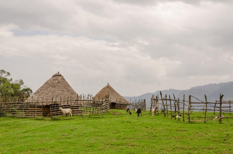 Traditionellt halmtäcka, lera och wood hus av fårbonden i högländer av Kamerun, Afrika arkivbilder