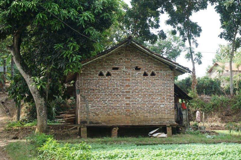Traditionellt hus för röd tegelsten på spenatlantgården i Javenese Village_1 arkivfoton