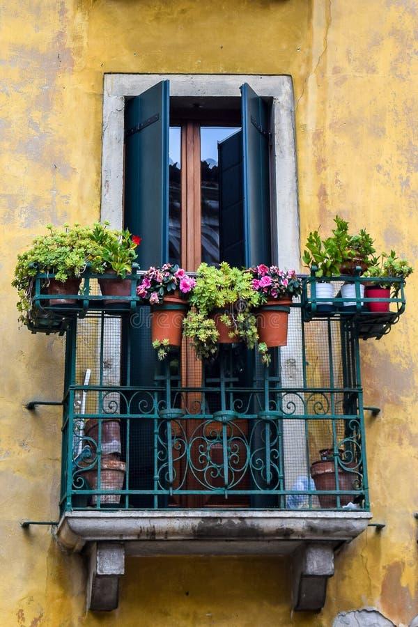 Traditionellt italienskt balkongfönster med växter, i Venedig Italien royaltyfria bilder