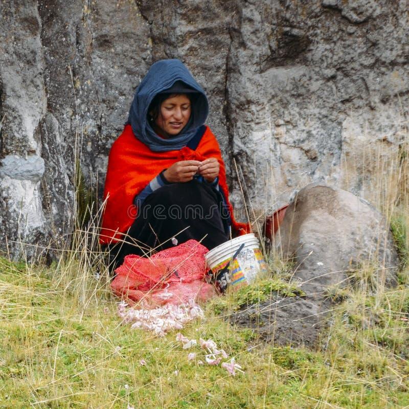 Traditionellt klädd ecuadoriansk kvinnapeelvitlök på sidan av en väg arkivfoto