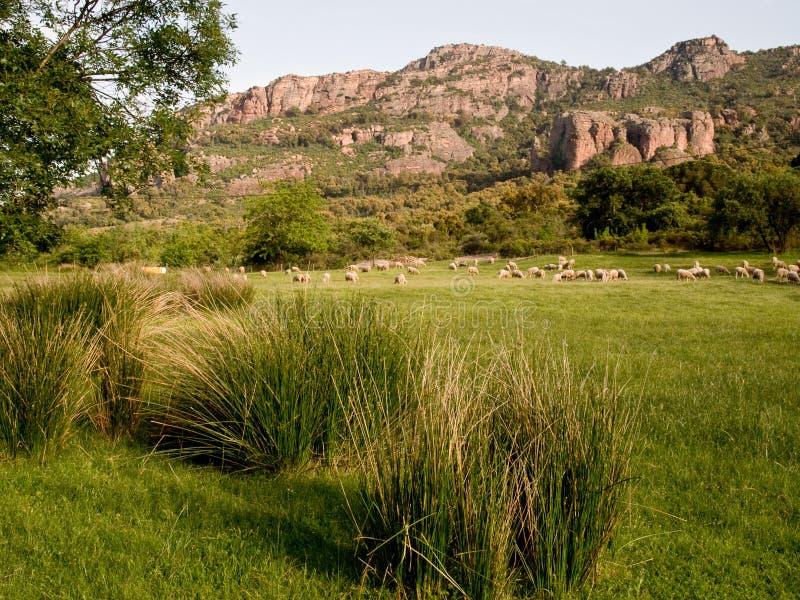 Traditionellt Provence lantligt landskap fotografering för bildbyråer
