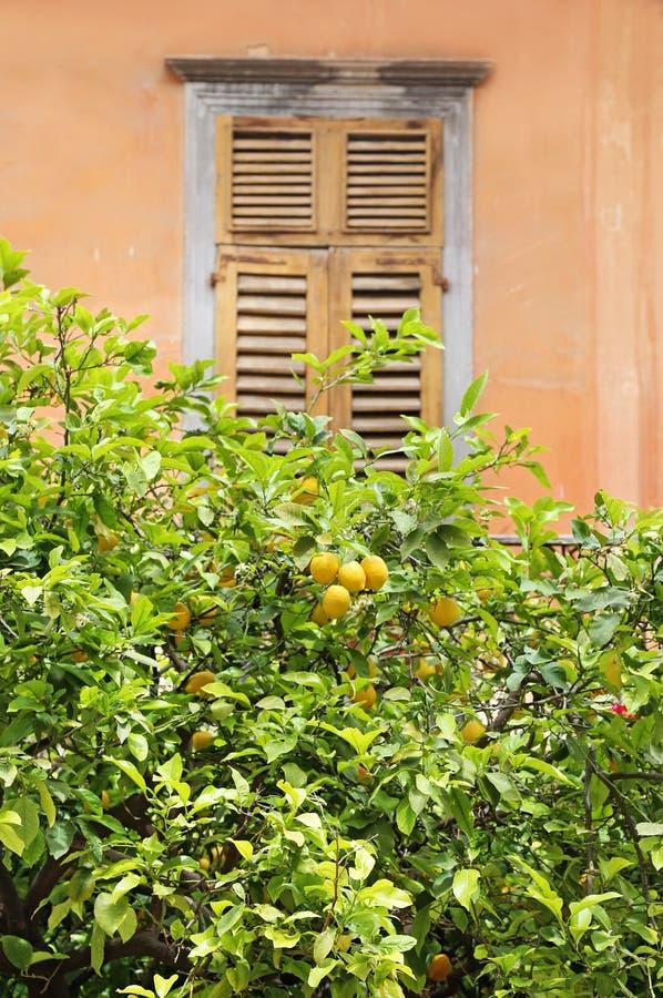 Traditionellt träfönster bak ett citronträd Nafplio Grekland fotografering för bildbyråer