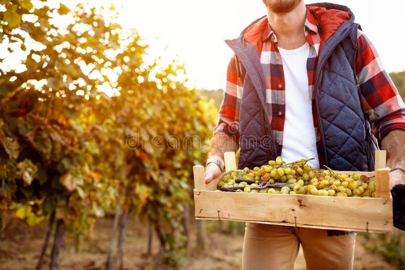 Tradizione della famiglia del raccolto dell'uva fotografia stock